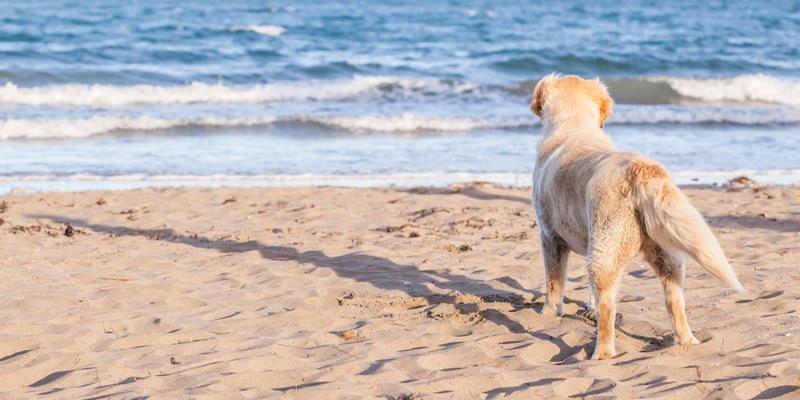 Dia praia canino - Quilometrosquecontam
