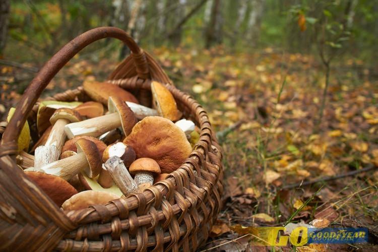 Rota cogumelos - Quilometrosquecontam