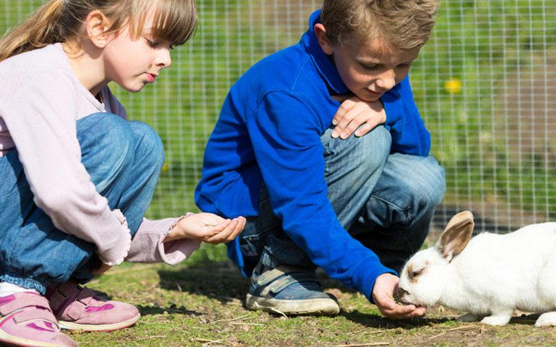 Crianças na quinta pedagoxica - Quilometrosquecontam