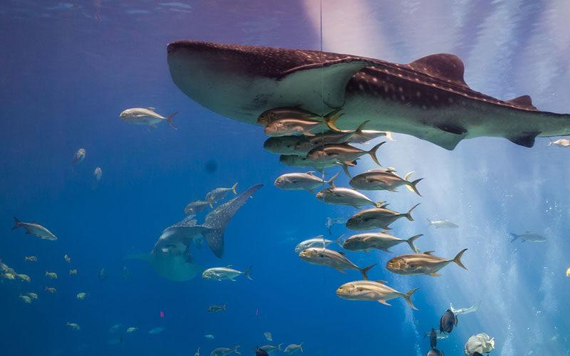 Oceanario - Quilometrosquecontam