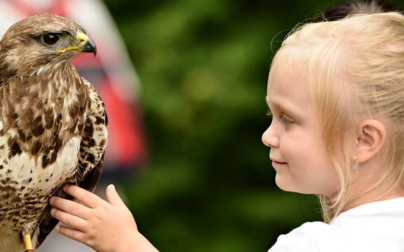 Criança com falcon