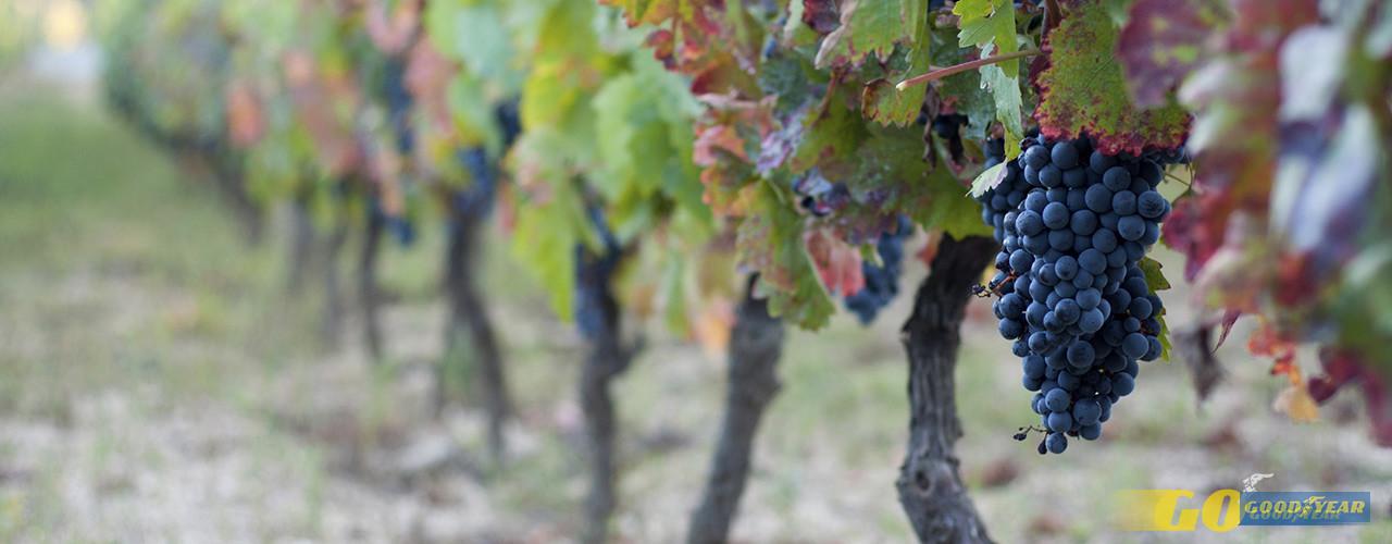 Viseu, encruzilhada dos sabores e vinhos do Dão