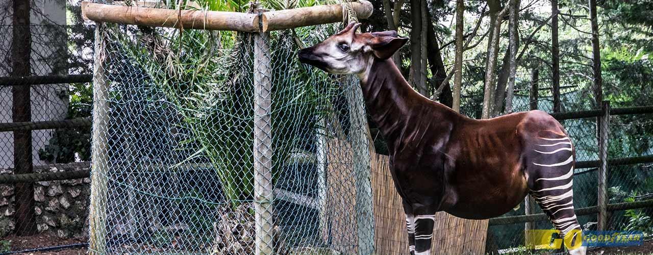 Férias de Natal do Jardim Zoológico