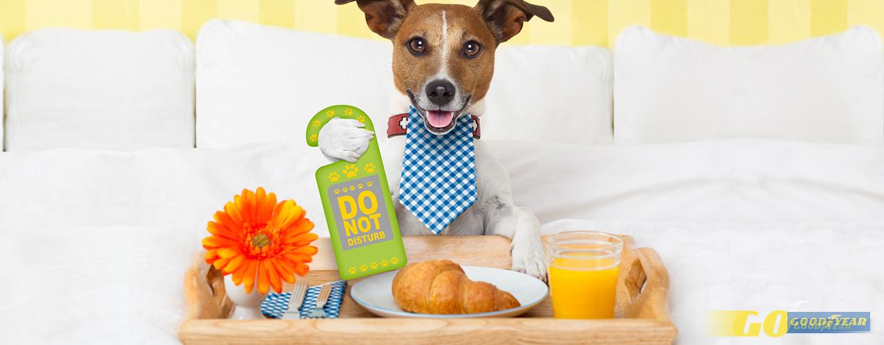 Férias com cães: sugestões de escapadelas com o fiel amigo