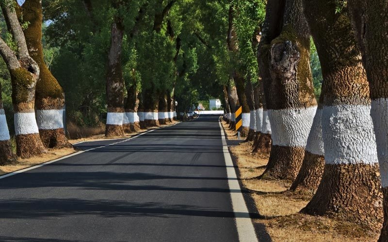 As 10 estradas mais perigosas de Portugal