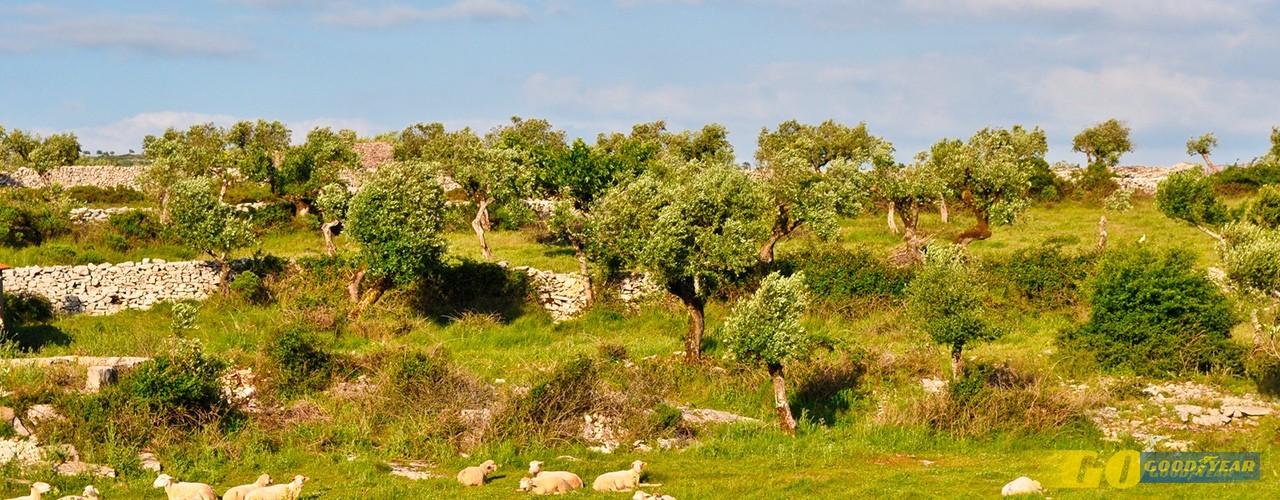 Aldeia de Chãos: fim-de-semana em comunhão com a natureza