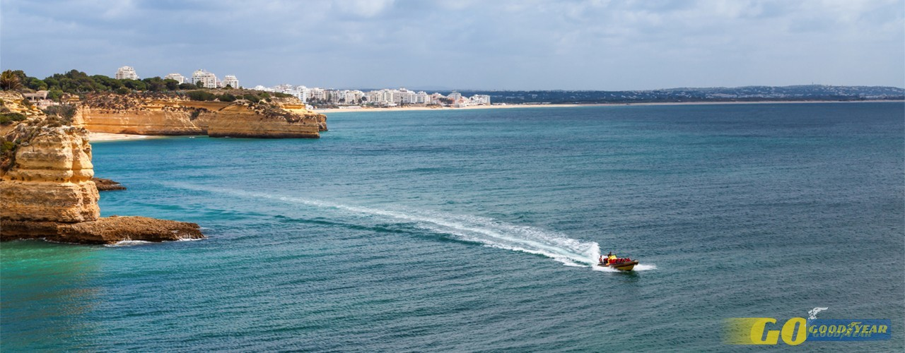 Onde e como observar golfinhos no Algarve