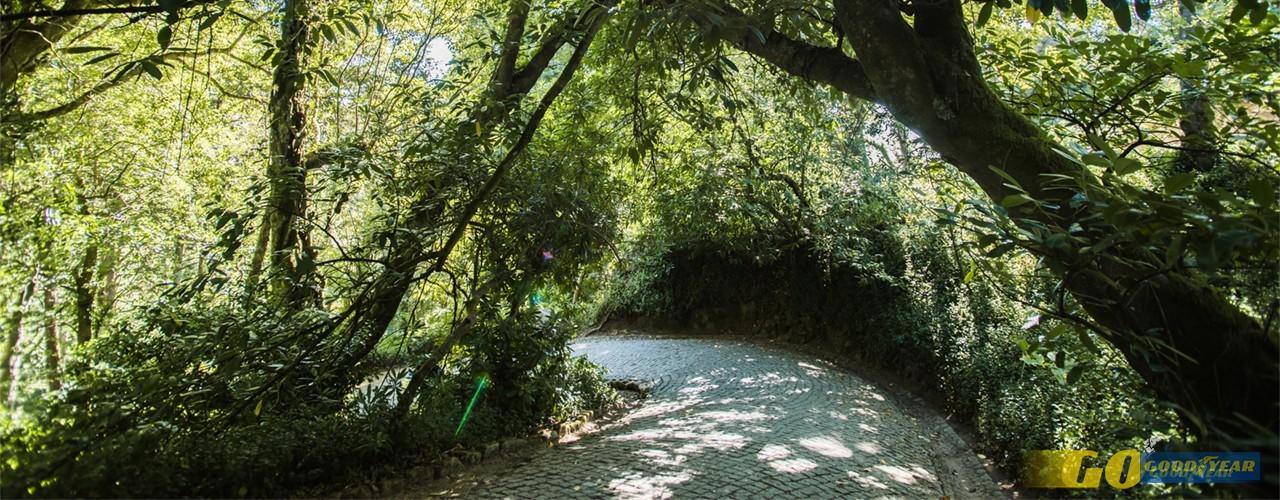 Piqueniques: 7 parques de merendas para levar a família