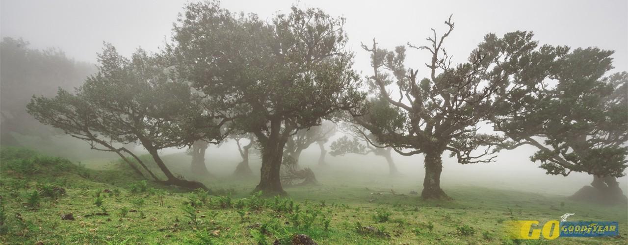 As 5 florestas mais espetaculares de Portugal