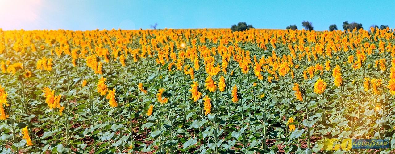 Baixo Alentejo: onde é sempre primavera