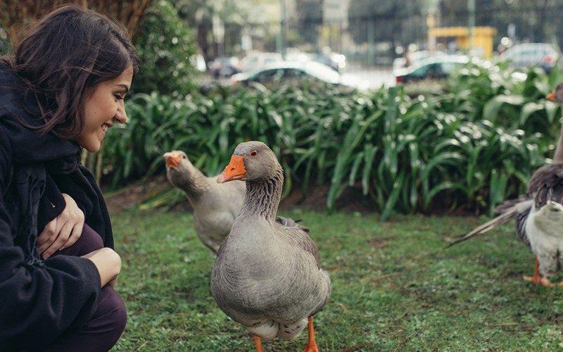 Jardim Botânico de Lisboa: está na altura de o conhecer ou revisitar