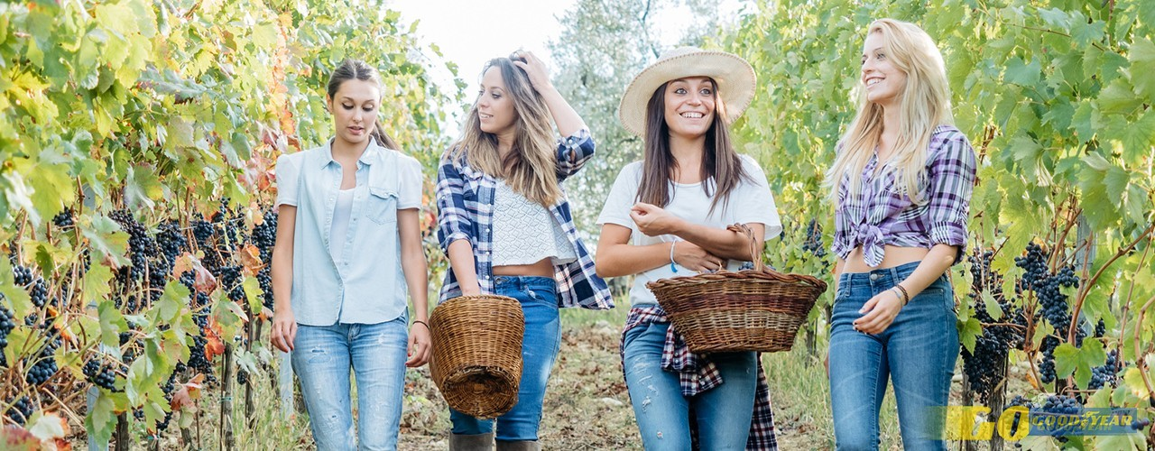Portugal Farm Experiences: ao encontro de agricultores inovadores