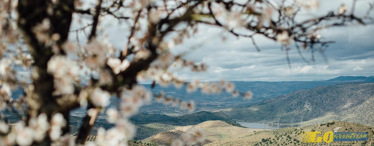 Rota das Amendoeiras: uma forma diferente de ver o Douro